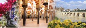 Sentir-Córdoba-Pagina-Web-Sin